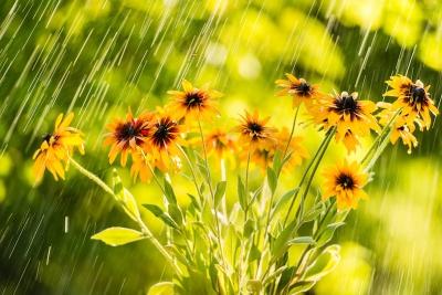 Flowers Rain Spring