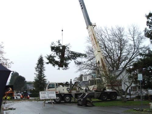 crane-tree-removal-3-lg
