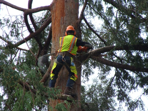 tree-cutting-prep-lg
