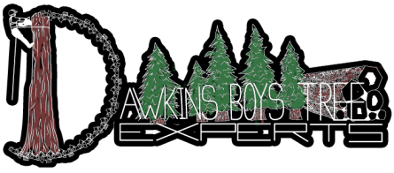 Dawkins-Boys-Tree-Experts