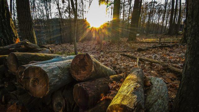 chopped-wood-environment-foliage-728885