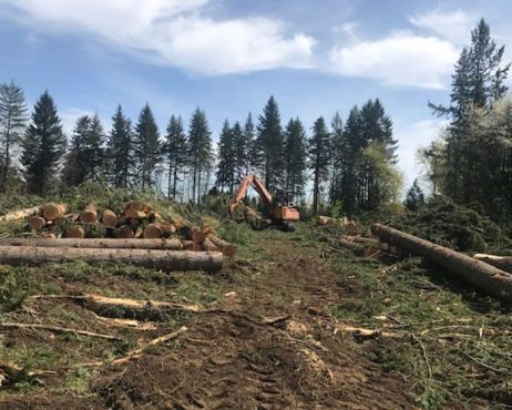 hillside-logging